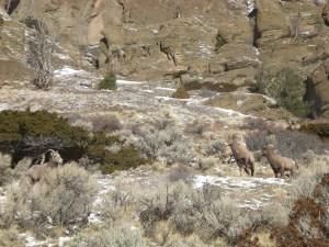Sheep on Deer Creek
